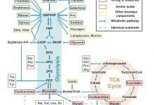 Photo of رمزگشایی یک مساله قدیمی میکروبیولوژی