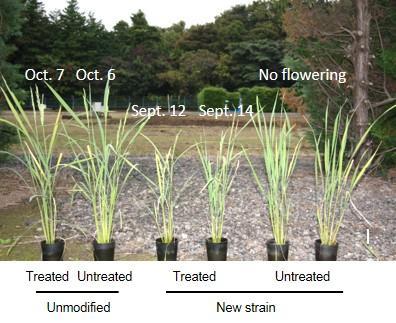 زمان گلدهی گیاهان با عوامل بسیار متنوع محیطی کنترل می شود. طول شبانه روز، دما و . . . از جمله این عواملند. اگر بتوان تأثیر این عوامل محیطی در گلدهی گیاهان را از بین برد و گلدهی را به یک عامل دلخواه وابسته کرد، گیاهانی خواهیم داشت که هر زمان که بخواهیم محصول می دهند.