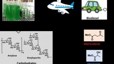 Photo of پسماند جلبک: منبع کربنی جایگزین برای مواد دارویی و پلیاسترها