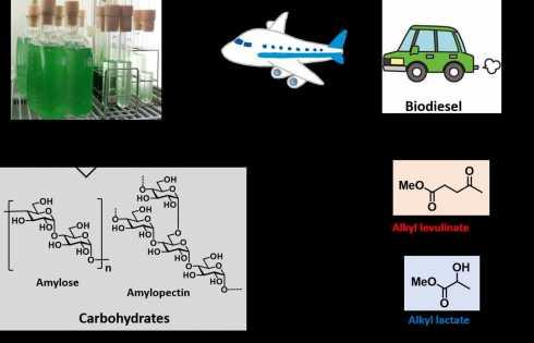 پسماند جلبک: منبع کربنی جایگزین برای مواد دارویی و پلیاسترها - اخبار زیست فناوری