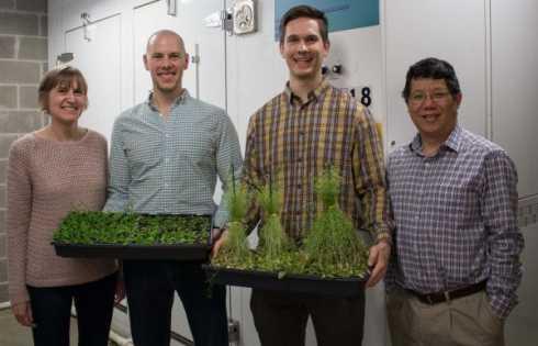 حلقه ارتباطی تنش و رشد نرمال گیاه - اخبار زیست فناوری