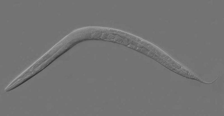 محققان دانشگاه فلوریدا در موسسه TSRI در مطالعهای که در مجله Cell Report به چاپ رسیده است، ادعا نمودهاند که یک پروتئین در ایجاد تعادل سلولهای عصبی نقش دارد.