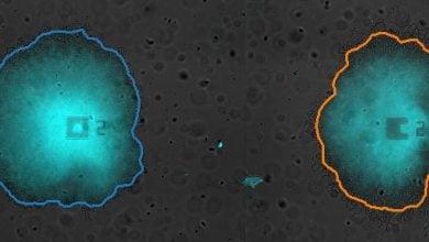 Photo of استراتژی تسهیم زمانی در باکتریها