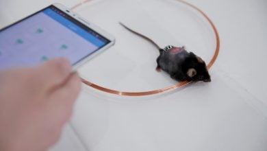 توانایی نرم افزارهای گوشیهای هوشمند در کنترل دیابت - اخبار زیست فناوری