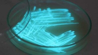 Photo of سنجش رادیواکتیویته توسط باکتریهای لومینسانت