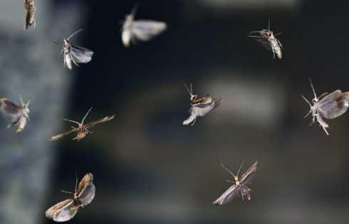 دستورزی ژنتیک پروانهها: آینده کنترل آفت - اخبار زیست فناوری