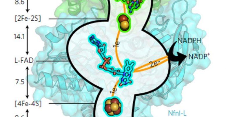 کشف روش جدید کسب انرژی در میکروبها - اخبار زیست فناوری