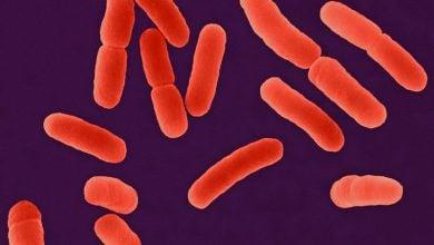 Photo of ساخت پروتئین غیر معمول توسط ژنهای ساختگی