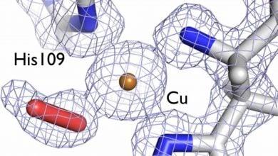 Photo of کاهش هزینه تولید سوخت زیستی با درک بهتر ساختار آنزیمها