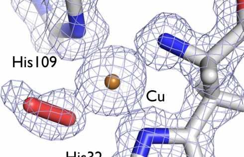 کاهش هزینه تولید سوخت زیستی با درک بهتر ساختار آنزیمها - اخبار زیست فناوری