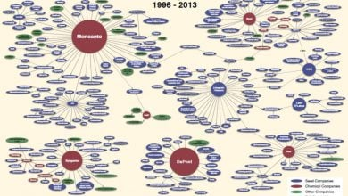 Photo of شکل بازار بذرهای تراریخت در جهان