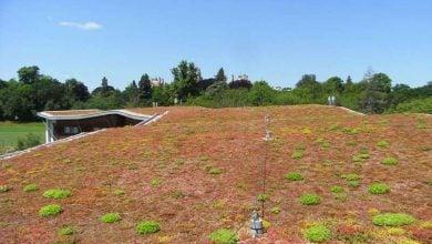 Photo of افزایش تنوع زیستی در بام های سبز
