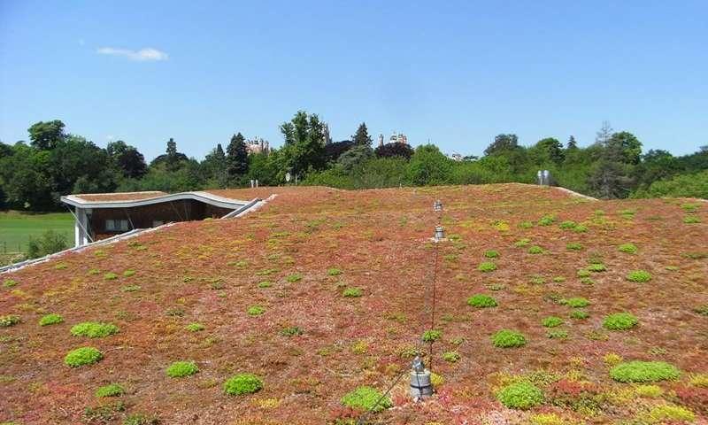 افزایش تنوع زیستی در بام های سبز - اخبار زیست فناوری