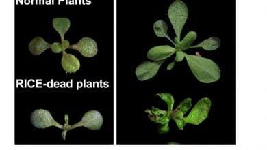 Photo of شناسایی دو پروتئین جدید در ارتباط با نمو گیاه
