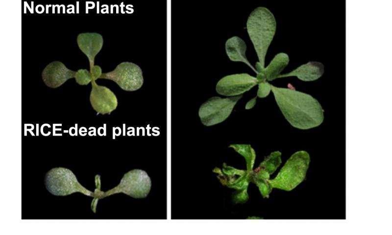 شناسایی دو پروتئین جدید در ارتباط با نمو گیاه - اخبار زیست فناوری