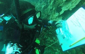 باکتری های همزیست با اسفنج دریایی ترکیبات سمی تولید میکنند - مجله زیست فن