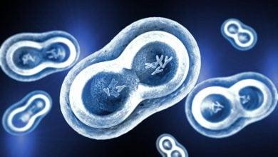 Photo of روشی نوین در جهت پیشگیری از رشد سلولهای سرطانی