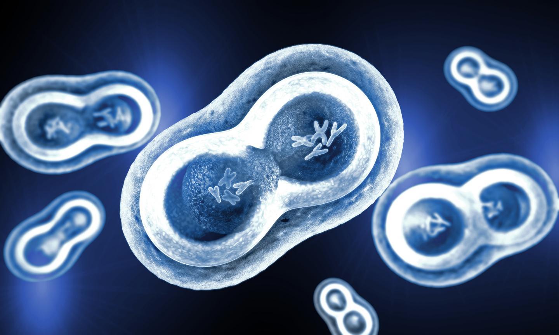 روشی نوین در جهت پیشگیری از رشد سلولهای سرطانی - اخبار زیست فناوری