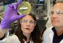کشف توانایی بلقوه ضایعات برای تبدیل به سوخت زیستی - مجله زیست فن