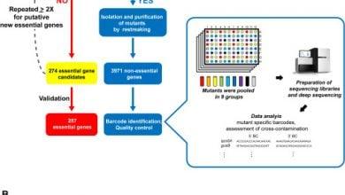 Photo of تجزیه و تشکیل تحلیل در دو سطح ژنوم باعث حذف کتابخانه های باسیلوس سوبتیلیس
