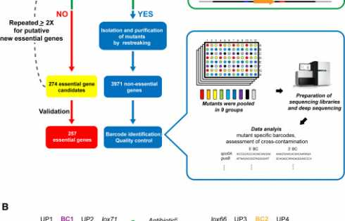 Construction and Analysis of Two Genome-Scale Deletion Libraries for Bacillus subtilis - اخبار زیست فناوری
