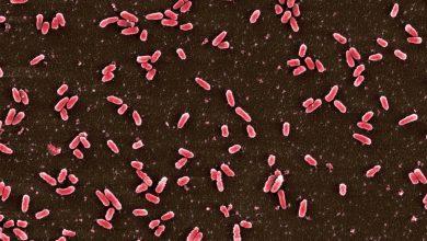 Photo of درمان آنتی بیوتیکی عوامل بیماری زا به بن بست رسید