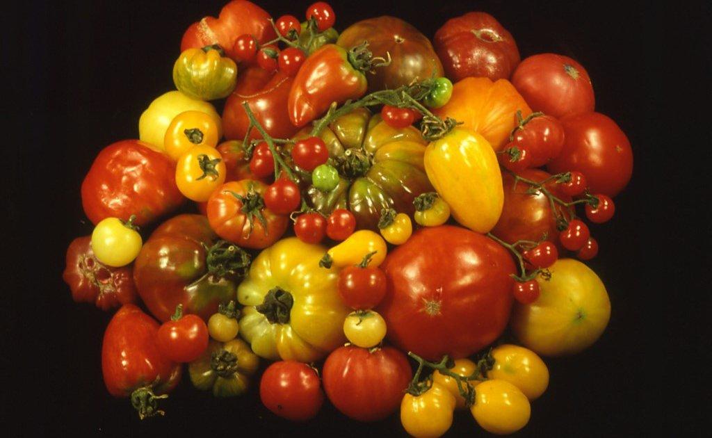 محصولات زراعی فراموش شده طعم بهتری به غذا میدهند.