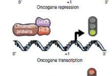 Photo of وجود دو خطای ژنتیکی همزمان که منجر به اصلاح عملکرد ضد توموری میشود