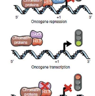 وجود دو خطای ژنتیکی همزمان که منجر به اصلاح عملکرد ضد توموری میشود - اخبار زیست فناوری