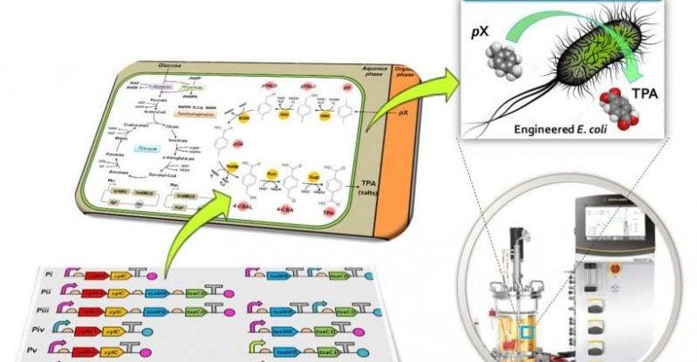 تبدیل پارا- زایلن به ترفتالیک اسید، توسط اِ.کلای مهندسی شده - اخبار زیست فناوری