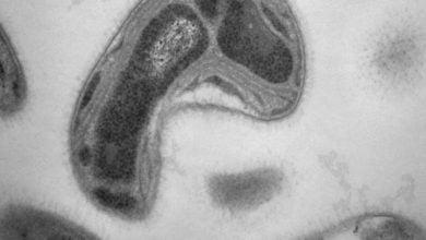 Photo of کاهش سطوح جیوه سمی در طبیعت با کمک باکتریهای متانوتروف