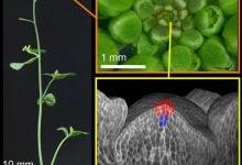 رفتار مشابه و شگفت انگیز سلول های بنیادی در گیاهان و حیوانات - اخبار زیست فناوری