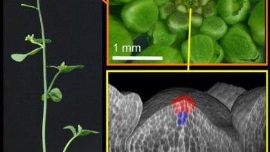 Photo of رفتار مشابه و شگفت انگیز سلول های بنیادی در گیاهان و حیوانات