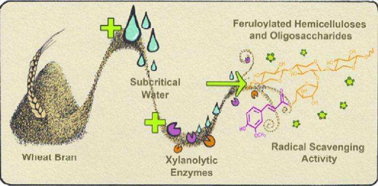 امکان تهیه آنتی اکسیدان و پلاستیک، از محصولات جانبی غلات - اخبار زیست فناوری