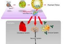 نگرشهای جدید درباره مکانیسمهای تنطیم بیان ژن در سلولهای بنیادی جنینی - زیست فن