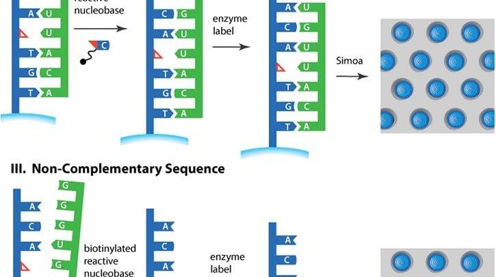 تشخیص سمیت کبد توسط اندازهگیری میزان یک microRNA