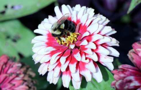 بهبود نرخ بقای زنبورهای عسلِ در معرض آفتکش توسط پروبیوتیکها