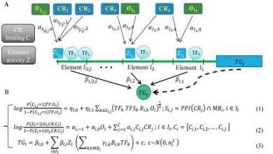 Photo of مدل جدید تنظیم بیان ژن بر اساس ساختار کروماتین