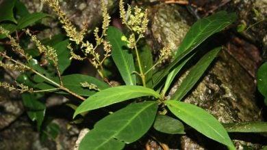 Photo of ترکیبات طبیعی گیاهی علیه HIV مقاوم به دارو