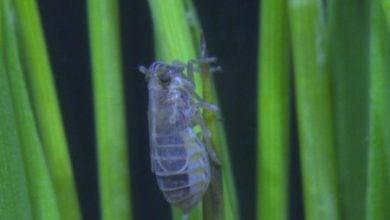 Photo of آنزیم JNK : روش نوین کنترل طغیان بیماریهای گیاهی