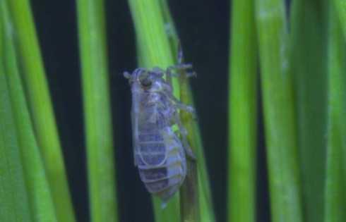 آنزیم JNK : روش نوین کنترل طغیان بیماریهای گیاهی