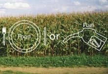 Photo of استفاده از ذرت به عنوان غذا، بهتر از استفاده برای تولید بیوفیول است!