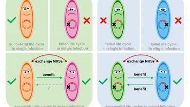 Photo of فسیل های ژنتیکی ویروسی