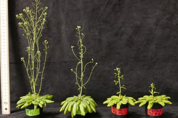 Incremental discovery may one day lead to photosynthetic breakthrough - اخبار زیست فن