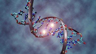 متیلاسیون DNA میتواند ابتلا به سرطان را پیشبینی کند - اخبار زیست فناوری