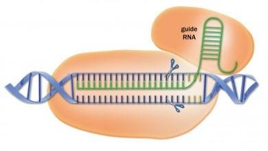 Photo of افزایش قدرت ویرایش ژن توسط توالی CRISPR