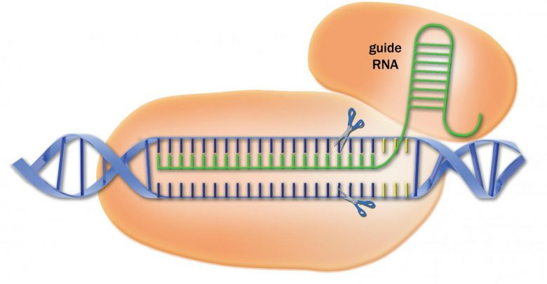 Library of CRISPR targeting sequences increases power of the gene-editing method - اخبار زیست فن
