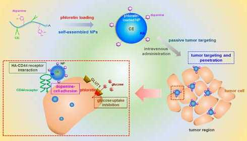 Mussel-inspired property of dopamin introduced to nanoparticles for tumor targetting - اخبار زیست فن