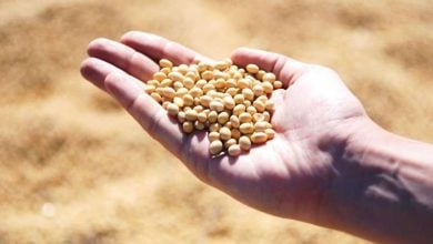 Nutritional value of soybean meal varies among sources from different countries - اخبار زیست فن