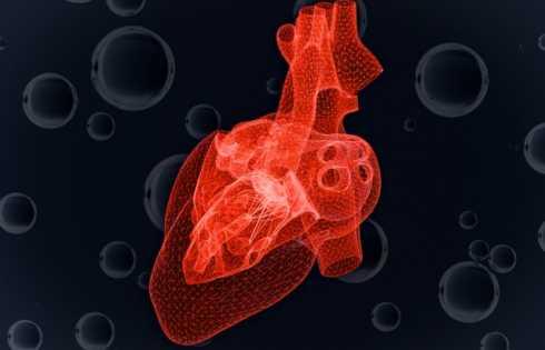Study predicts heart cells' response to dwindling oxygen - اخبار زیست فن